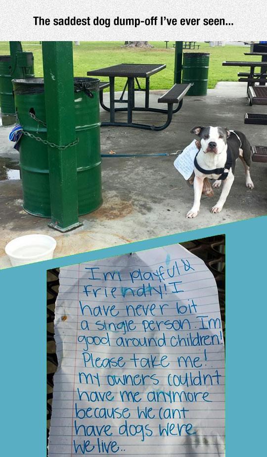 cool-dog-sad-dump-off-note
