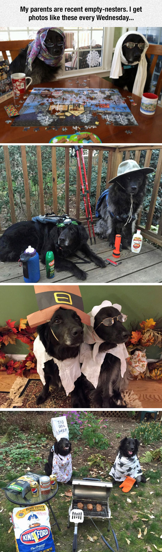 funny-dogs-dressed-up-playing-games