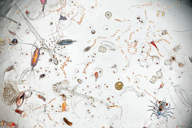 A single drop of seawater, magnified 25 times