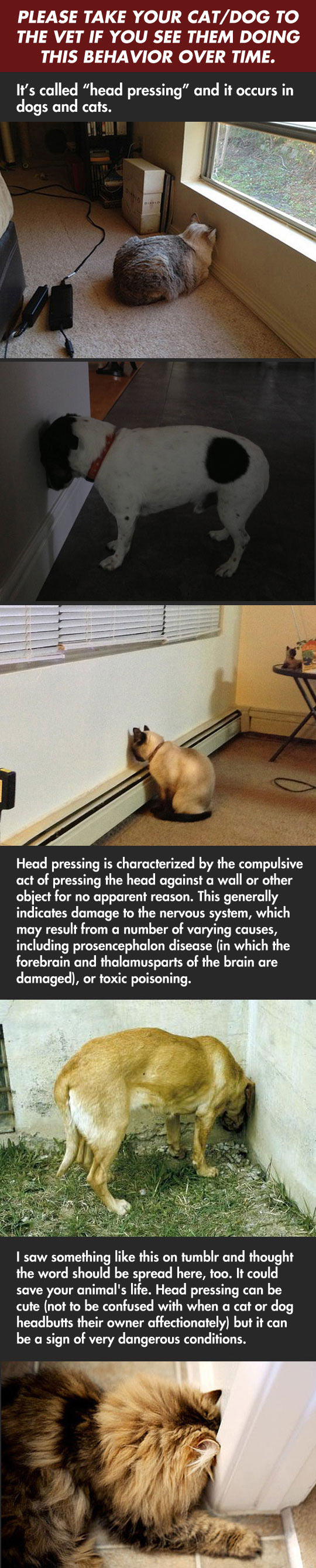 cat-dogs-warning-head-pressing