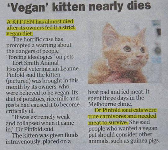 cool-vegan-kitten-owner-newspaper
