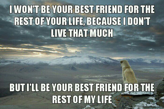 dog-best-friend-life