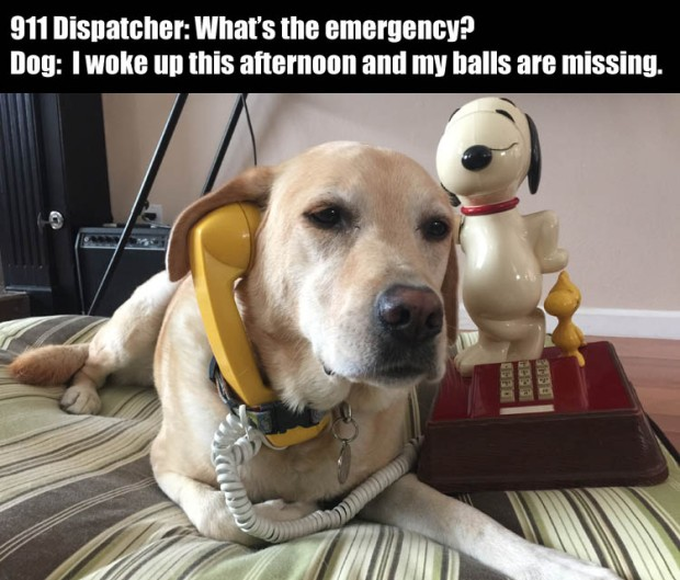 c-funny-dog-on-phone