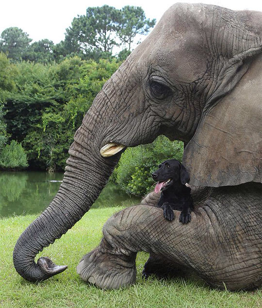 cool-elephant-dog-hug-friends