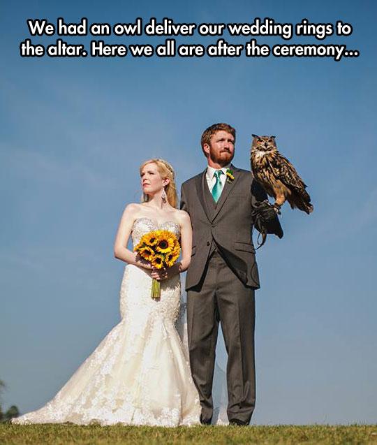 owl-wedding-rings