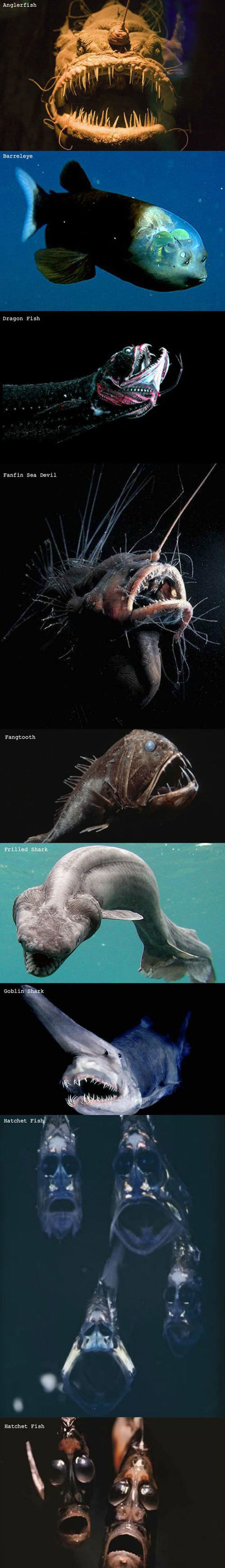 scary-looking-fishes
