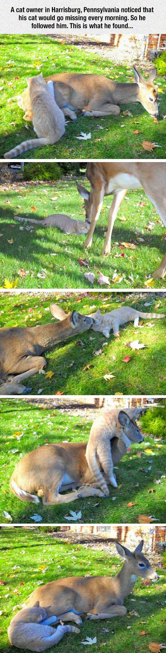 cool-cat-playing-deer-yard