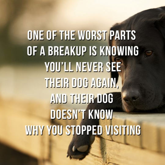 cool-dog-girlfriend-missing-visit