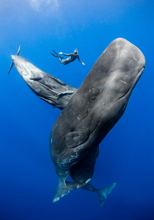 cool-whale-diving-swimming-ocean