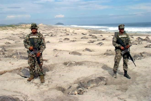 mexican-marines-set-to-prevent-turtle-eggs-poaching