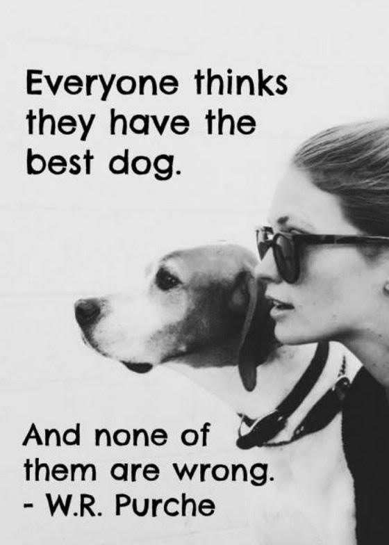 everyone-thinks-they-have-the-best-dog