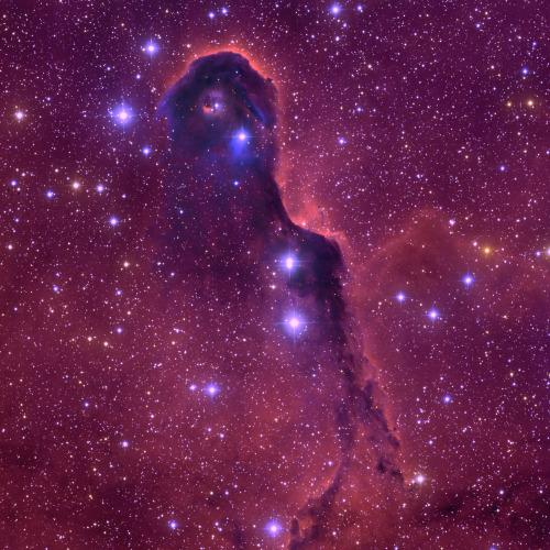 the-elephant-trunk-nebula