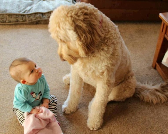 baby-looking-to-dog